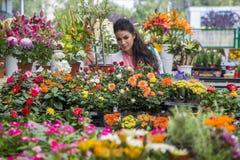 Flores de compra de la mujer joven Foto de archivo libre de regalías