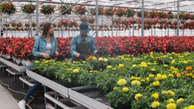 Flores de compra de la mujer en una tienda iluminada por el sol del jard?n 4K Compras de la mujer joven para las plantas decorati metrajes