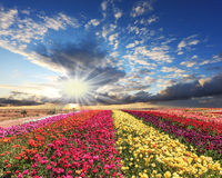 Flores de cores brilhantes Fotos de Stock