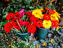 Flores de corte imagenes de archivo