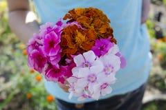 Flores de corte frescas a disposición de la muchacha Fotos de archivo libres de regalías