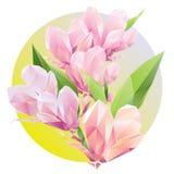 Flores de Crystal Pink con las hojas del verde del polígono Imagenes de archivo