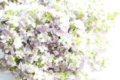 Flores de cuco hermosas imagenes de archivo