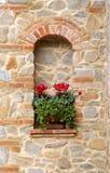 Flores de Cyclamen Fotografía de archivo