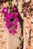 Flores de Cyclamen imagens de stock