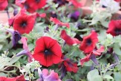 Flores de Doha Corniche foto de archivo libre de regalías