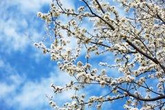 Flores de Easter foto de stock royalty free