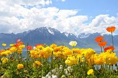 Flores de encontro às montanhas e ao lago Genebra Fotografia de Stock Royalty Free