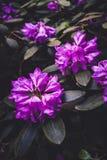 Flores de Fiolet no teste padrão tropical botânico do plano do jardim imagem de stock