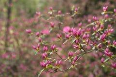 Flores de florecimiento rosadas en campo Fotos de archivo libres de regalías