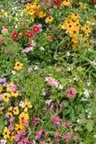 Flores de florescência Fotografia de Stock Royalty Free