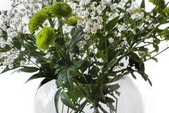 Flores de florescência fotos de stock