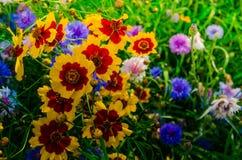 Flores de florescência imagem de stock