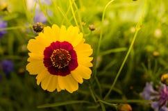 Flores de florescência imagens de stock