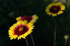 Flores de florescência imagem de stock royalty free