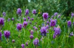 Flores de florescência imagens de stock royalty free