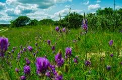 Flores de florescência Foto de Stock Royalty Free