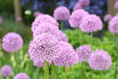 Flores de florescência bonitas da mola Foto de Stock