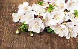 Flores de florescência da mola Imagens de Stock
