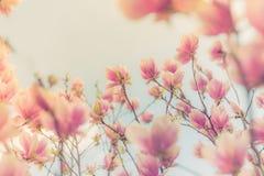 Flores de florescência do verão lindo da mola, fundo inspirado da natureza Imagens de Stock Royalty Free