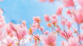 Flores de florescência do verão lindo da mola, fundo inspirado da natureza Imagens de Stock