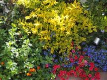 Flores de florescência em um jardim do telhado Foto de Stock Royalty Free