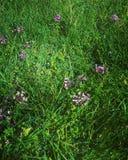 Flores de florescência na grama verde Fotografia de Stock