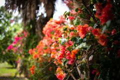 Flores de floresc?ncia no tempo de mola foto de stock