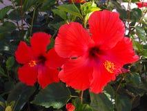 Flores de Florida Foto de Stock