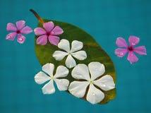 Flores de flutuação Fotos de Stock