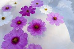 Flores de flutuação do cosmos Fotos de Stock Royalty Free