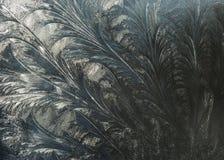 Flores de Frost Fotografia de Stock Royalty Free