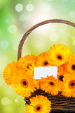 Flores de Gerber no vime Fotos de Stock Royalty Free