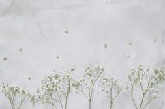 Flores de Gipsofila no fundo do papel do vintage Imagens de Stock Royalty Free