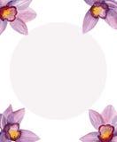 Flores de Havaí Molde do projeto de cartão Imagens de Stock