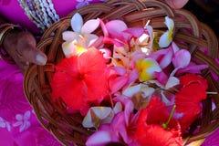 Flores de Hawaiin, imagens de stock
