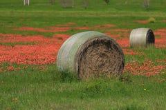 Flores de Hay Bale e do pincel indiano Fotografia de Stock Royalty Free
