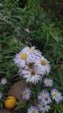 Flores de Hdden imagen de archivo