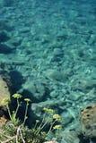 Flores de hinojo del mar Imagen de archivo