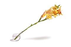 Flores de inclinação Imagem de Stock
