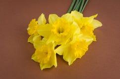Flores de Jonquil imagem de stock royalty free