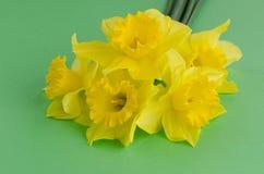 Flores de Jonquil Fotos de Stock