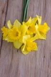 Flores de Jonquil Fotografia de Stock Royalty Free