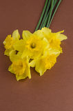 Flores de Jonquil Imagem de Stock