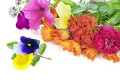 Flores de julho Fotografia de Stock Royalty Free