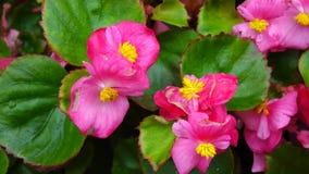 Flores de Kalanchoe no dia ensolarado video estoque
