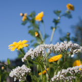 Flores de Kitchengarden Foto de archivo