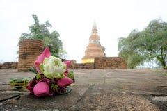 Flores de lótus cor-de-rosa e brancos frescas para a adoração em um templo velho Fotos de Stock