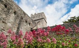 Flores de la abadía de Muckross Foto de archivo libre de regalías