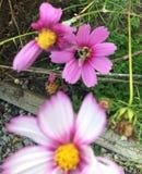 Flores de la abeja Foto de archivo